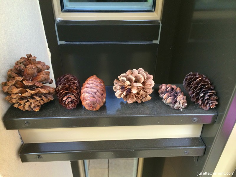 Juliette's pine cone collection