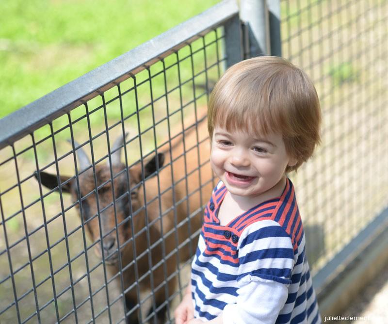 Hungry goat=happy Juliette!