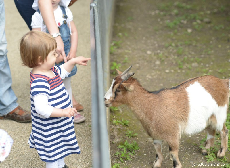 Goats are Juliette's favorites.  She could spend all afternoon with them.